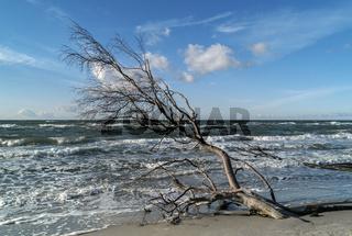 Abgebrochen... Baum am Ufer