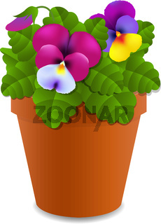 Flower Pansy