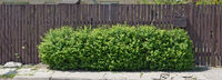 Long wooden fence and green bush on city street
