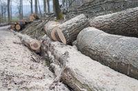 timber industry in the woods around Schwaebisch Hall, Germany