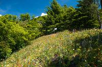 Colourful flower field
