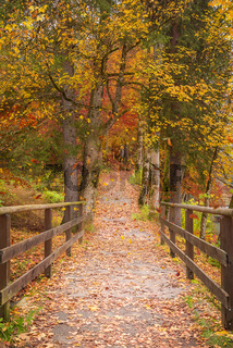 Long path through the colorful forest