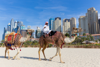 Man offering camel ride on Jumeirah beach, Dubai, United Arab Emirates.