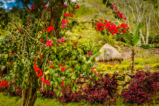 Colourful flowers in greenery