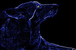 Wolf - dark blue