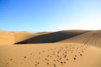 Footsteps in the desert sand