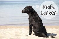 Dog At Sandy Beach, Kraft Tanken Means Relax