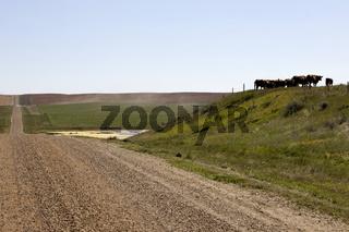 Prairie Scene Saskatchewan