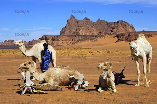 Tuareg Nomaden mit Reitkamelen auf einem Rastplatz