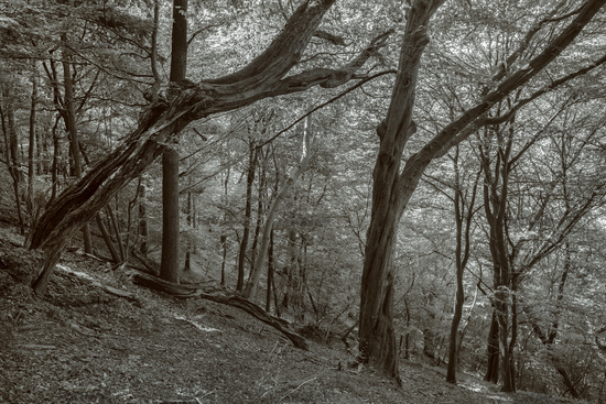 The forest at the slope