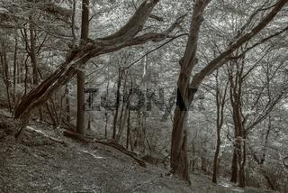 Der Wald am Hang