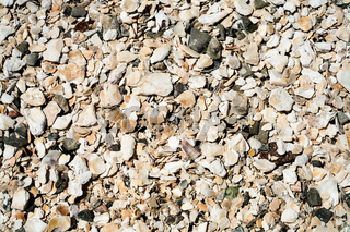 surface from mollusks shells of beach in Cancale