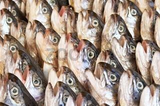 Forellenköpfe - trout heads