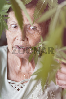 Shocked senior woman with Cannabis plant