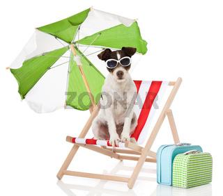 Hund im Liegestuhl