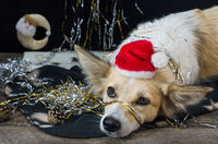 Funny dog on new year's Eve
