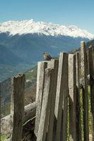 Vogel auf Zaun in den Bergen