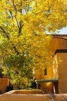 Yellow leaves on tree on Canyon Road, Santa Fe, New Mexico.