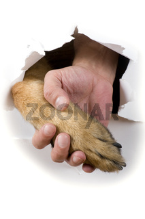 dog and man hand close up