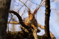 curious squirrel near the tree