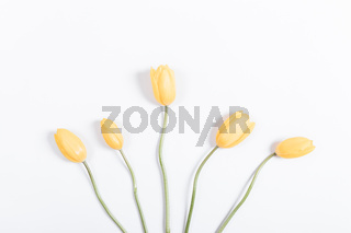 Beautiful yellow tulips with green stems on white background