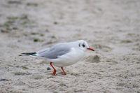 seagull bird on sea beach