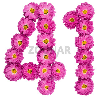 Arabic numeral 41, forty one, from flowers of chrysanthemum, isolated on white background