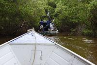 Bootsfahrt durch die Mangroven, Canavieiras, Bahia, Brasilien, Südamerika
