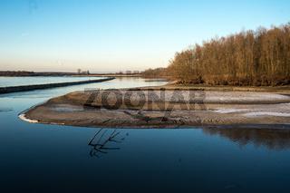 Sandbank im Altrhein im Winter