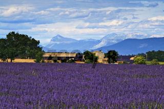 Lavendelgut, Valensole, Provence, France