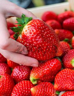 Big organic strawberries.