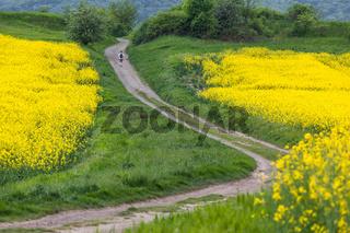 Teufelsmauer mit gelben Rapsfeld Harz