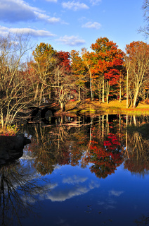 Fall forest reflections