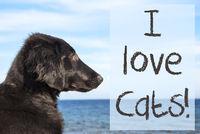 Dog At Ocean, Text I Love Cats