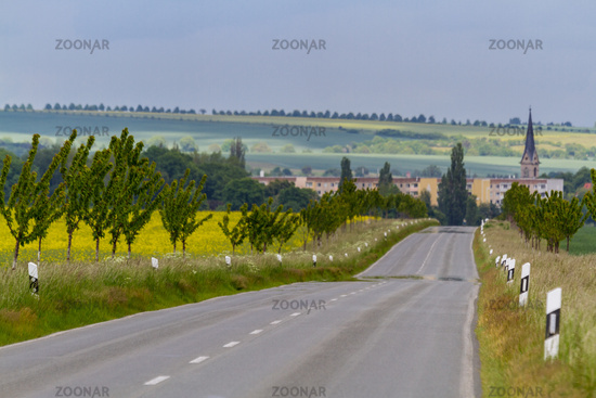 Country road to Gatersleben in Saxony-Anhalt