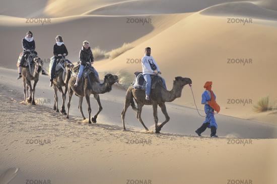 Camel Trekking