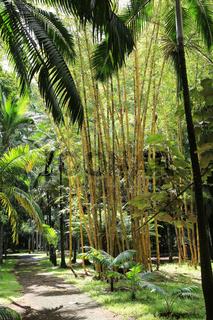 Mauritius, Botanischer Garten, Bambusgarten und Palmen