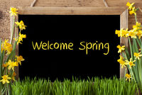 Flower Narcissus, Chalkboard, Text Welcome Spring
