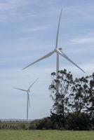 Wind Turbines Behind Trees