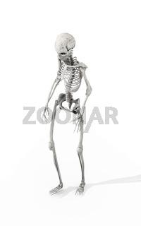 Walking Skeleton
