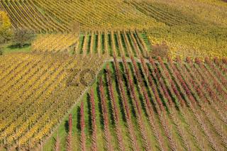 Weinberge bei Geddelsbach im Hohenloher Land