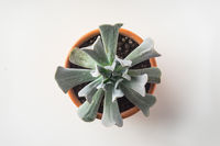 Business concept - Top view of cute succulent green plant on white background desk for mockup