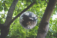 old disco ball hanging in trees - disco ball