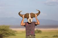 Man holding big african buffalo skull wearing it like a mask in nature on african wildlife safari.