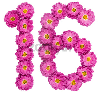 Arabic numeral 16, sixteen, from flowers of chrysanthemum, isolated on white background