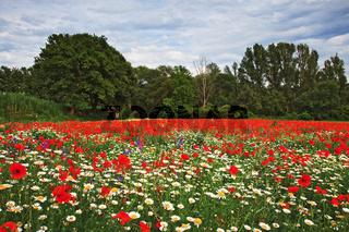 Wildblumenfeld im Asse-Tal, Provence, France