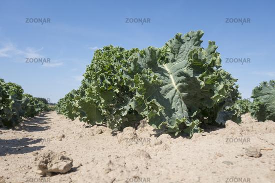 Salad on a field