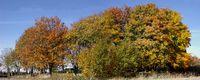 Autumn landscape panoramic 1