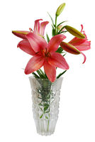 Lily Bouquet in Vase
