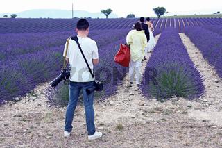 Plateau de Valensole, Provence, Fankreich